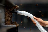 米NYタイムズスクエアに3万匹のミツバチ飛来、掃除機で捕獲