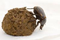 生物多様性には昆虫など低知名度の種も重要、英科学者が保護促す
