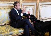 マクロン仏大統領の愛犬が暖炉で「用足し」、副大臣との会議中断