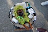 ハロウィーン恒例の「犬の仮装パレード」、NYの公園で