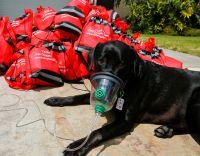 「イルマ」で停電の民家、酸素マスクでペットにも救命処置