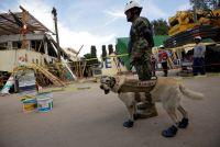 メキシコ地震、レスキュー犬フリーダが救助活動の象徴に