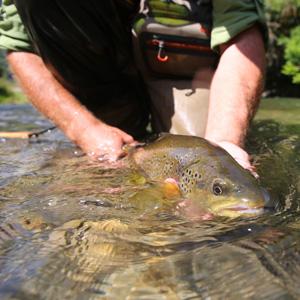 日本の釣り愛好家が魚を釣った後の行動に衝撃を覚えた=中国メディア