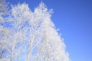 雪が見たいなら中国北部にもあるのに! なぜ中国南部の人は北海道に行くのか=中国メディア