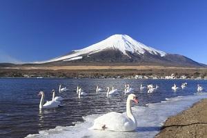 日本で暮らしたい! 歴史のわだかまりがあっても「より良い暮らしを求めるのは当然」=中国