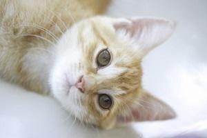 ネコと同伴出社ができて、しかも手当てまでもらえるなんて・・・日本の会社が羨ましい!=中国メディア