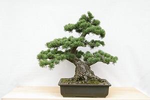 また出た日本人の「黒技術」! 動く盆栽、それは伝統と現代のクリエイティブな融合だ!=中国メディア