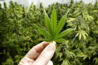 ラッパー・UZIが大麻所持で逮捕 「これだからラッパーは」「スジを通せ」の声
