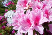 公園で花を摘んだ友利新にクレーム! 為末大や乙武洋匡も反応