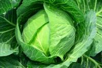 「キャベツが1玉580円」野菜の価格高騰を嘆くツイート続々