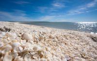 全長60km以上!貝がらでできた世界遺産シェル・ビーチ【オーストラリア】