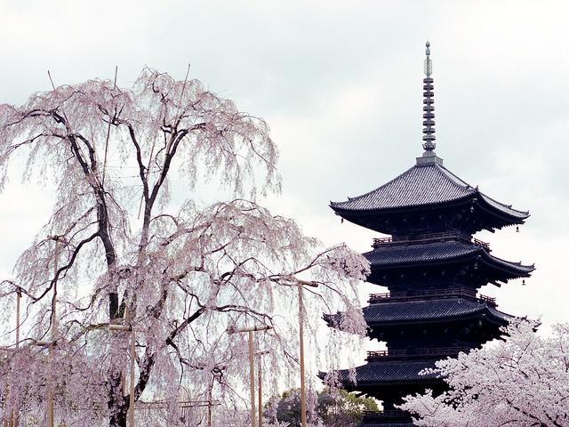 日本で一番高い木造建築は?
