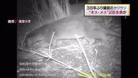 カワウソはオス・メス2匹生息か、長崎・対馬で38年ぶり確認