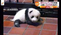 赤ちゃんパンダの名前、公募に32万件あまり