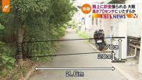 大阪の路上に針金張られる、殺人未遂容疑も視野に捜査