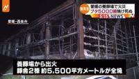 愛媛で養豚場火災、ブタ5000頭以上死ぬ