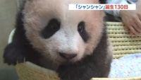 赤ちゃんパンダ・シャンシャン誕生130日、最新映像を公開