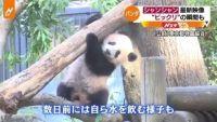 """パンダのシャンシャン 最新映像、""""ビックリ""""の瞬間も"""