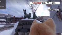 """グーグル、""""犬の目線""""のストリートビュー公開"""