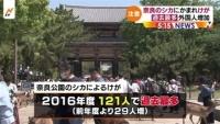 奈良公園のシカによるけが 過去最多