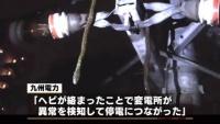 ヘビが電線に絡まり停電、熊本市の一部100戸で