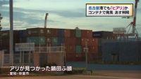 名古屋港でも「ヒアリ」か、コンテナで発見