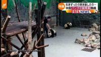飼育員がパンダを引きずったり突き放したり・・・