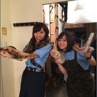 橋本環奈と石川恋 ヘビと戯れる姿に「本物?」「怖くない?」の声