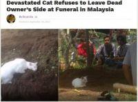 亡くなった飼い主の墓から去ろうとしない猫(画像は『NextShark 2017年9月19日付「Devastated Cat Refuses to Leave Dead Owner's Side at Funeral in Malaysia」』のスクリーンショット)