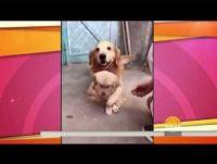 産まれたばかりの仔犬を必死で守る過保護なパパ犬<動画あり>