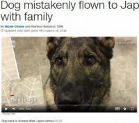 日本行きの便に誤って乗せられた犬、無事アメリカに帰国 飼い主「ユナイテッド航空は二度と利用しない」