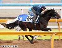 【富士S】ペルシアンナイト 楽々と半馬身先着にミルコ「マイルのほうがこの馬にはいいはず」