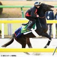 【ジャパンカップ】外国馬ギニョール ハナ主張「この馬のスタイルでレースがしたい」