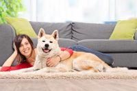 なぜか海外で「秋田犬」が意外なほど人気の理由