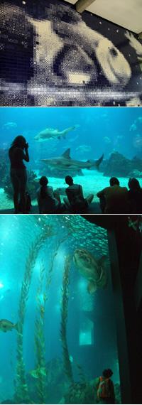 ヨーロッパ最大の「リスボン水族館」に行ってきたよ