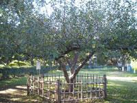 ニュートンのリンゴの木がやたらと生えている