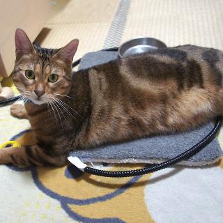 新品ペット用ホットカーペット 犬 猫用 温度調節可 …