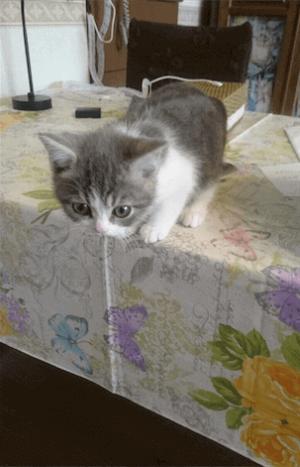 【かわいいネコ画像】床に降りるのが怖いから眠って現実逃避するニャンコ
