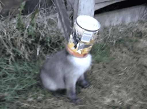 【動画】可愛らしい子ギツネ「頭からとれないの~」その空き缶をとってあげると……