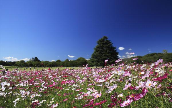 シルバーウィークにぴったり! コスモス・彼岸花が咲き乱れるスポット