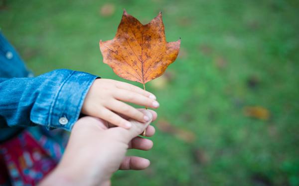 紅葉の季節を子どもと一緒に・・・紅葉と落ち葉の絵本