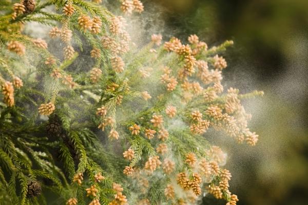 つらくてたまらない! みんながしている花粉症対策とは?
