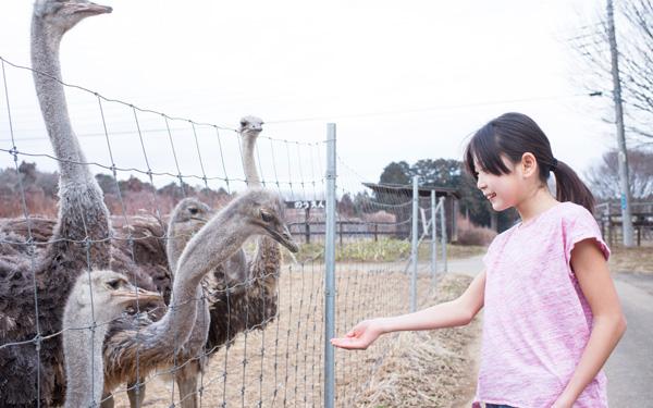 動物園では味わえない「ダチョウ牧場」にハマる人続出! カピバラ、アルパカにも会える