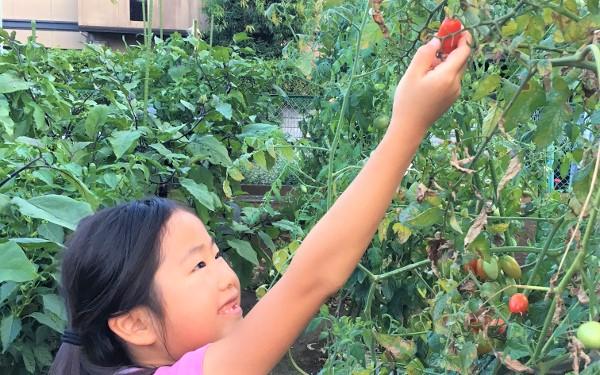体験農園、小学生、食育