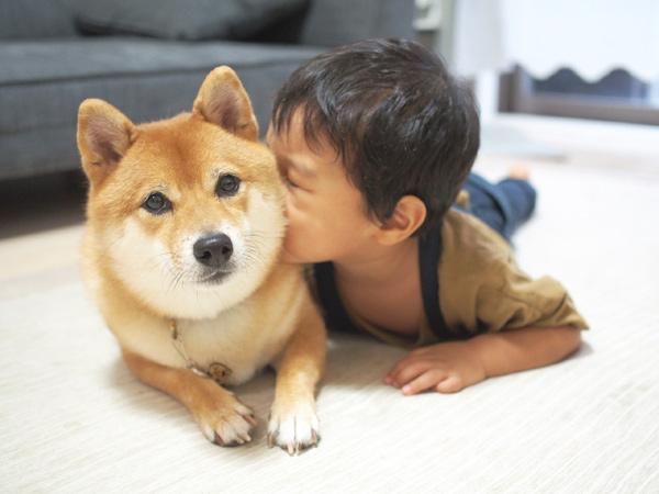 柴犬八朔と弟くん。福岡で犬と暮らしながら子育てをする八朔ママさん