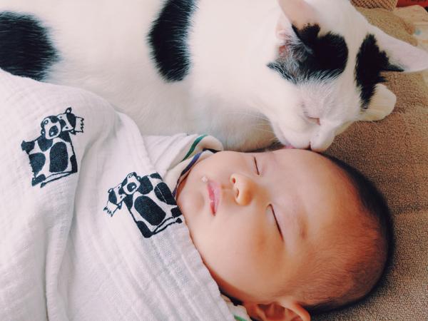 【いぬねこ うちのこ。】たいくん(3歳)と猫のザクロ/もりもとりえ さん