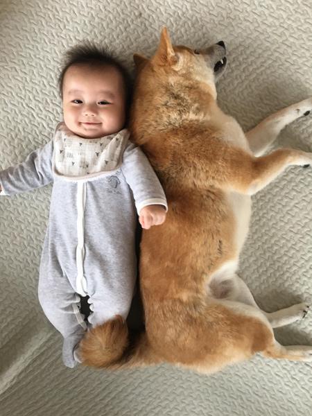 【いぬねこ うちのこ。】もあちゃん(2歳)かいくん(8カ月)と柴犬の銀次郎くん/つのだももか さん