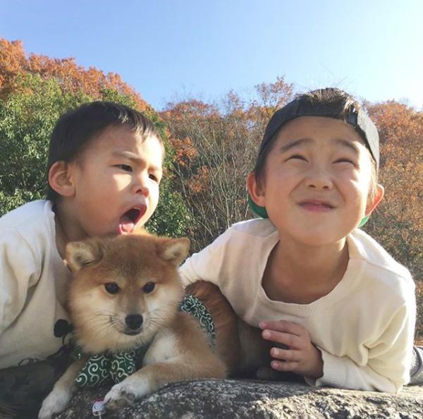 【いぬねこ うちのこ。】いっせいくん(6歳)、しょうきくん(4歳)とポメ柴犬のmiro/はあちゃんさん