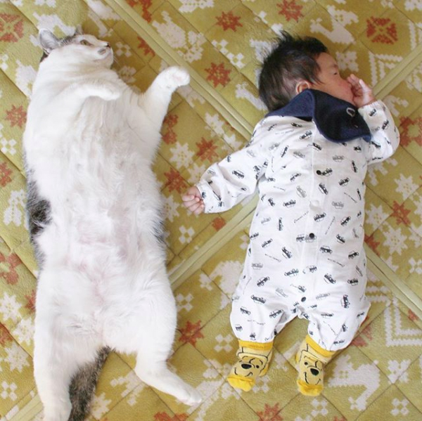 【いぬねこ うちのこ。】晴太くん(2歳)と猫のマイロ/鈴木賢一さん