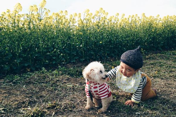 【いぬねこ うちのこ。】そうたくん(2歳)、トイプードルのぷー(16歳)/ぎんぺーさんとyuuuriさん